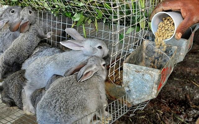 La Carne de Conejo y sus Beneficios para la Salud