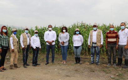 Evaluación de cultivares de maíz y sorgo para la producción de forraje